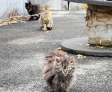 Feral Cats. Photo credit: ASPCA