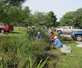 Volunteers removing invasive phragmites and cattail in the bioswale at Wildwood Park.