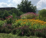 View looking south of main pollinator garden.