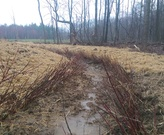 Live Stakes installed along a headwater stream.